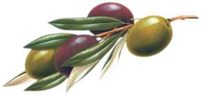 logo-olive-caroli