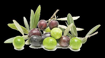 olive-top-caroli