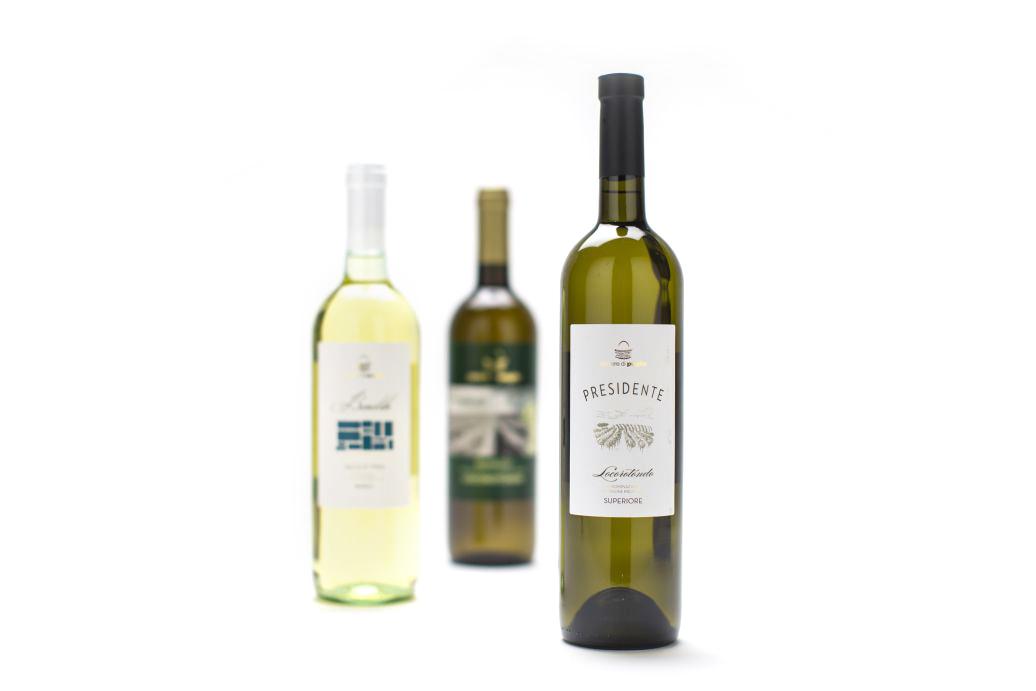 caroli-vini-bianchi-pugliesi-1